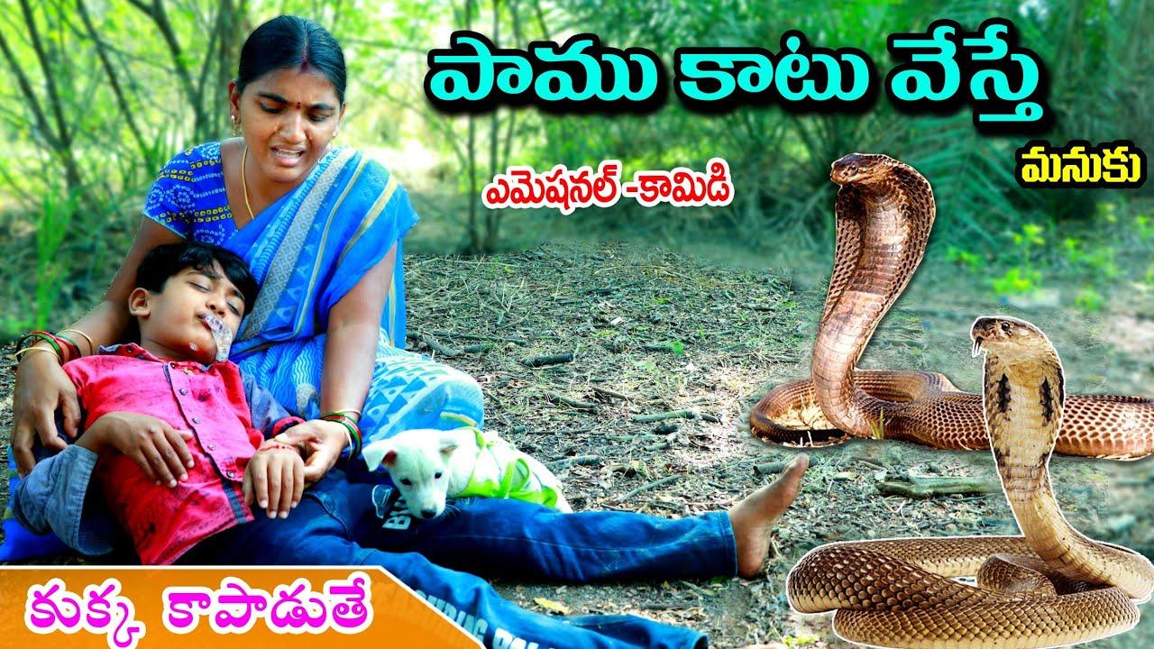 Download పాము కాటేస్తే || Paam Katesthe kukka kapadithe || Manu Videos || Telugu letest all