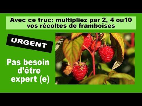 Les secrets de la taille et de la greffe des arbres fruitiers bio comment r ussir la culture - Quand et comment tailler les framboisiers ...