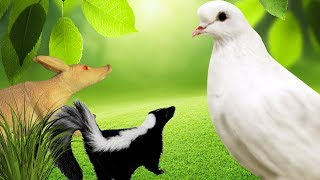 ОГРОМНАЯ БЕЛАЯ ПТИЦА НАПАДАЕТ!!! Злая шутка. Мультфильмы про животных для детей