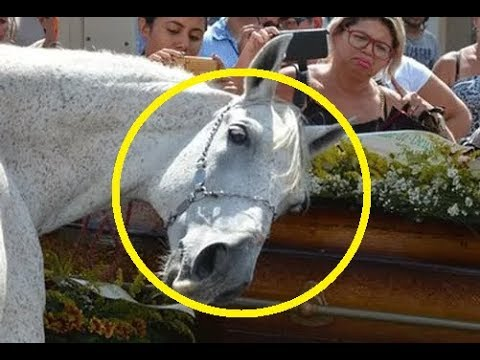 Лошадь пришла на ПОХОРОНЫ своего хозяина. Увидев это, люди впали в ступор...