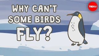 Why can't some birds fly? -  Gillian Gibb