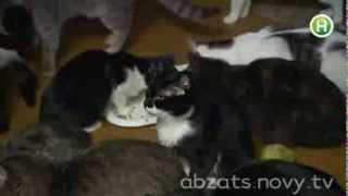 Настоящий кошачий рай для кошек! - Абзац! - 17.10.2013