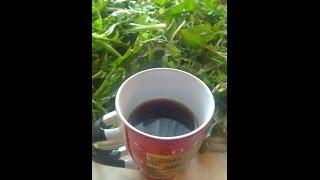 Мой кофе из корня одуванчика: заготовка, сушка, напиток