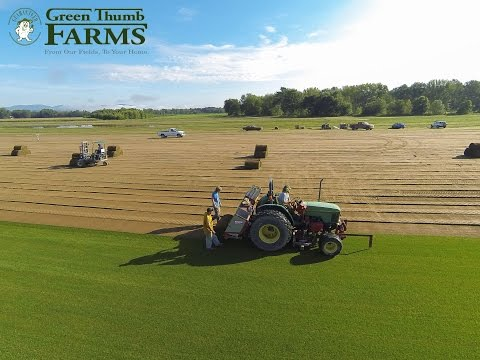 Green Thumb Farms Turfgrass