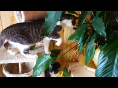 Cats 4k UHD 🐈 🐱 Kevin MacLeod  Daily Beetle (No copyright music)