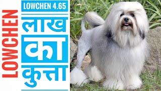 LOWCHEN 4.65 LAKH KA DOG./दुनिया का सबसे महंगा कुत्ता. #short. #doglowchen. #aajkafact.