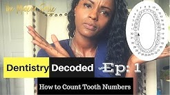 How to Count Tooth Numbers?   Dentistry Decoded Ep.1