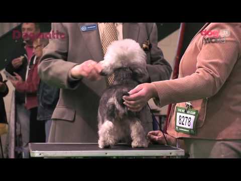 Midland Counties Dog Show 2015 - Terrier group FULL