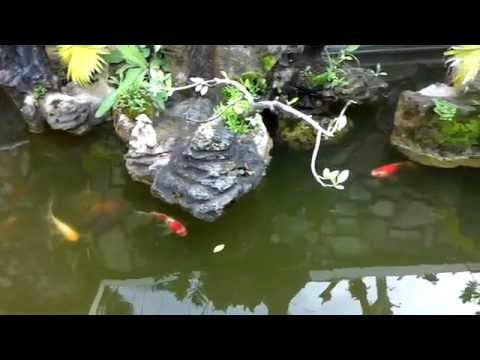 Penjing and bonsai . Hòn non bộ và cây cảnh