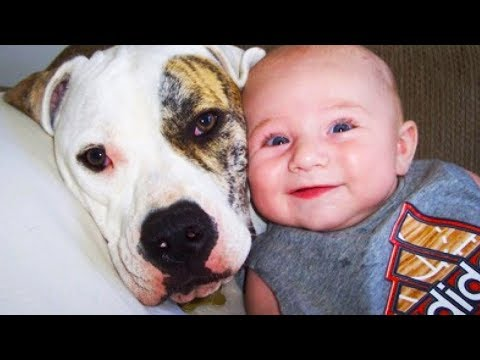 Cute Baby Giggling When Playing With Dog | Dog love Baby