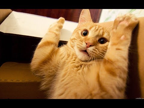 Adorable Funny Cat Videos | Baby Cat Videos 2019 Compilation For Babies