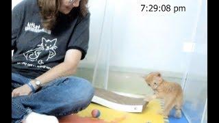 Kitkat Playroom: WELCOME HOME, TIGGER TOT! thumbnail