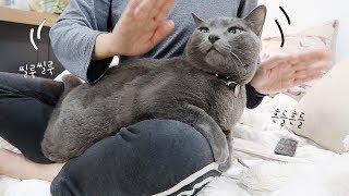 출렁출렁 둔실둔실🎵 아무리 춤을 추고 흔들어도 무릎에서 내려가지 않는 고양이
