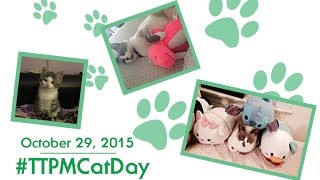 Win Cat Products & Toys In Our National Cat Day Photo Contest!