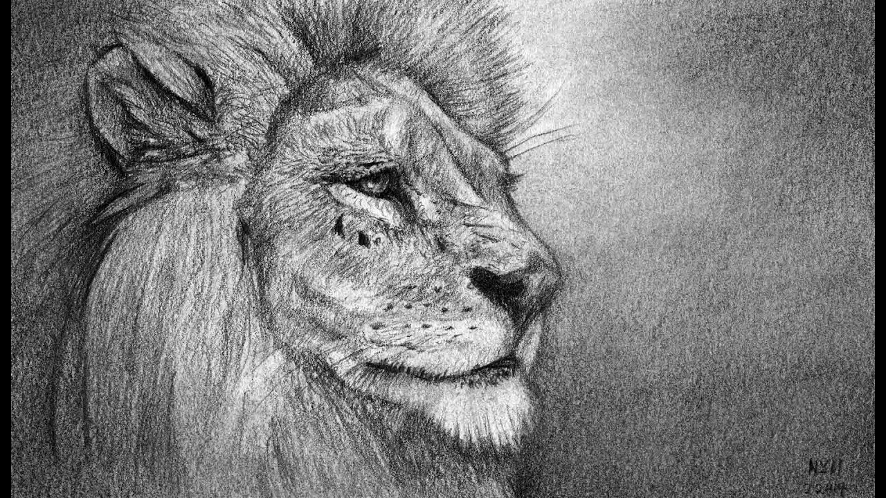 Uncategorized Lion Draw how to draw a lion portrait youtube