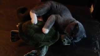 Приколы с котами.кот трахает игрушку