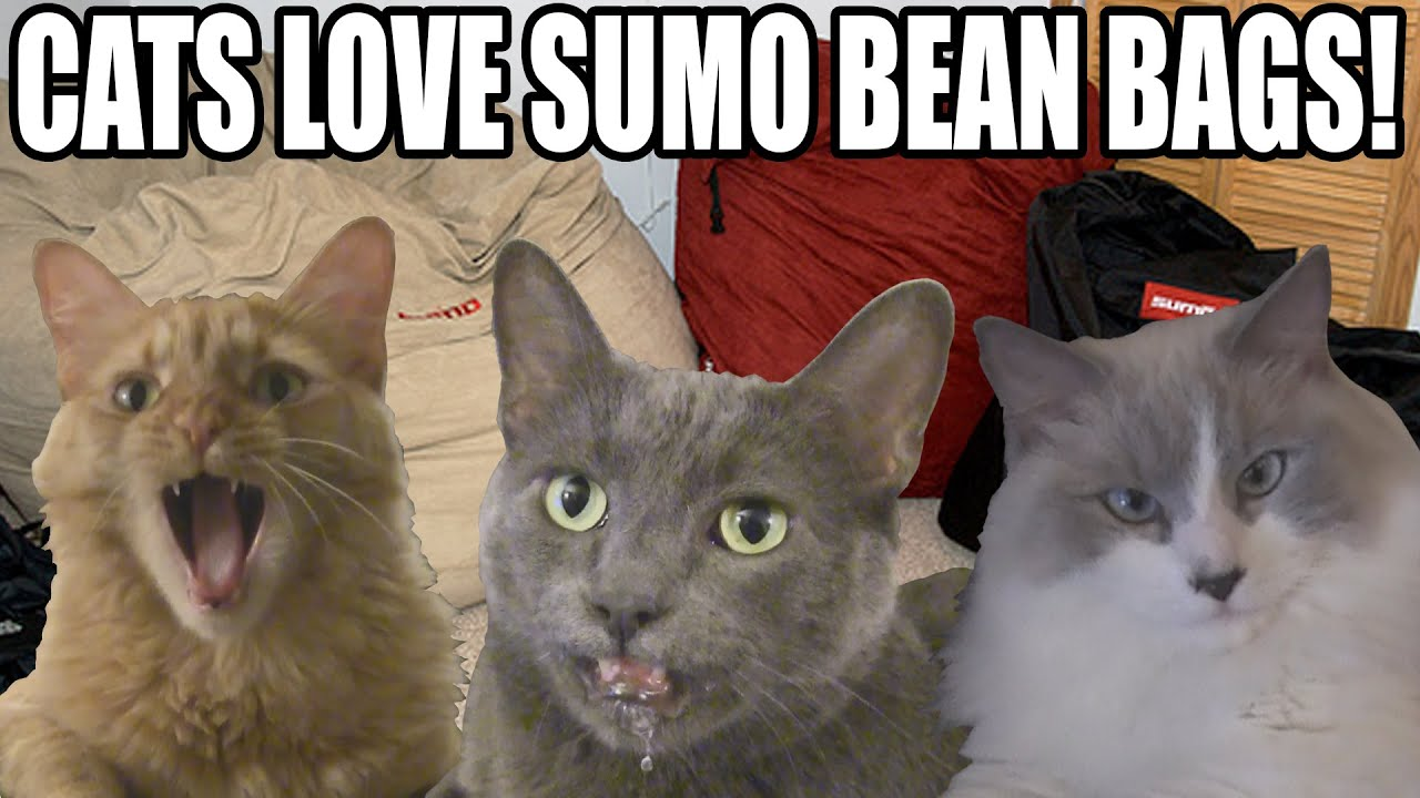 Cats Love Sumo Bean Bags! - LittleKuriboh