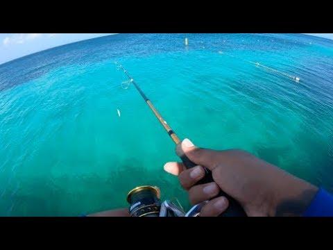 #Saltlife #Aruba #dsportfishing Just Another Day Of Fishing ||Ep16