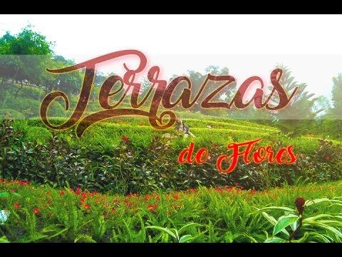 Terrazas De Flores Botanical Garden Busay Cebu City