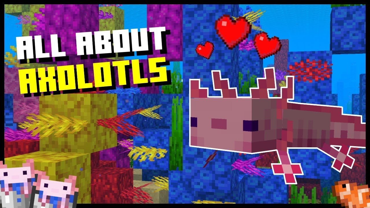 Minecraft Axolotl -Where To Find, How To Tame And Breed, What ...