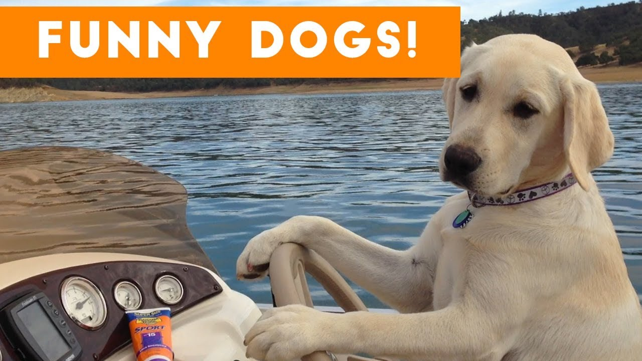 funny dogs compilation 2017 best funny dog videos ever