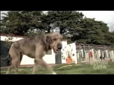 Trailer do filme Digby - O Maior Cão do Mundo
