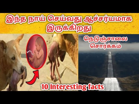 10 Interesting Unknown Facts | Top Interesting Facts in Tamil | World Interesting Facts