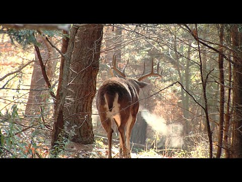 This Type of Stress Impacts Whitetail Bucks More than You Realize