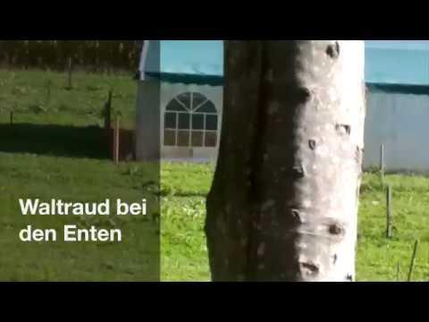 Waltraud bei den Enten - Hütter Pute&Huhn