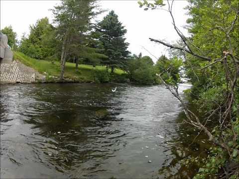 Grand Lake Stream Salmon Fishing