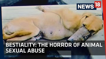 Bestiality | The Horror of Animal Sexual Abuse