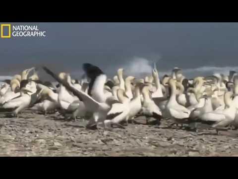 Predatory Fish   Feast Of Predators   Deep Ocean Predators   Ocean Kingdom   Nat Geo Documentary