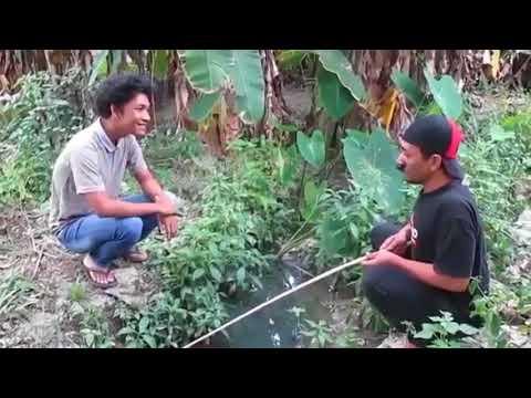 Video Whatsapp Lucu - Video Singkat Lucu - Status Wa Lucu - Video Singkat Lucu