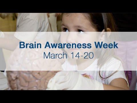 Celebrating Neuroscience Through Brain Awareness Week