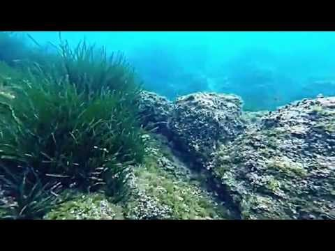Ermete - Nice, France - Scuba Diving - GoPro Hero 3+ BE