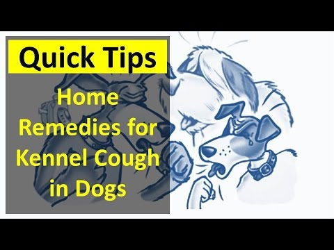 Home Remedies For Kennel Cough In Dogs Youtube