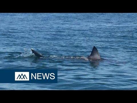 Beach evacuated due to sharks in Massachusetts - DIBC News