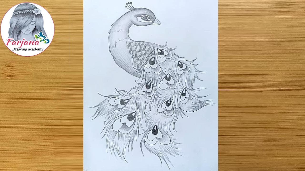 How To Draw A Peacock In Easy Steps Pencil Art Pencil Sketch Step By Step Youtube