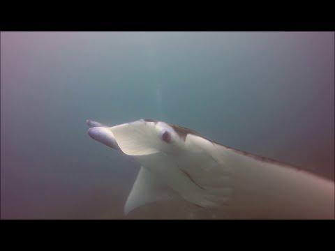 Diving Indonesia 2017 - Gilis - Bali - Nusa Penida - Komodo