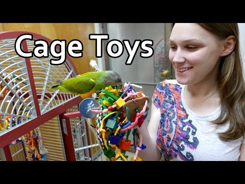 Adding Perches and Toys to Parrot Cages