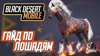 гайд Black Desert Mobile - Лошади от А до Я