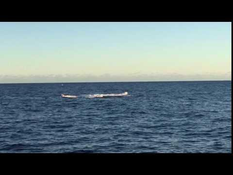 Australia- Whale in the ocean-7