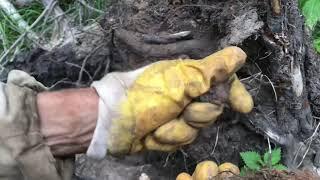 Металлокоп огромные сбросы металла в лесу