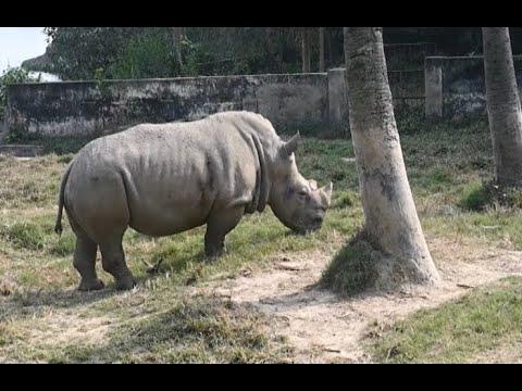 حديقة حيوانات بنغلادشية تبحث عن رفيق لأنثى وحيد قرن تشعر بالوحدة  - نشر قبل 10 ساعة