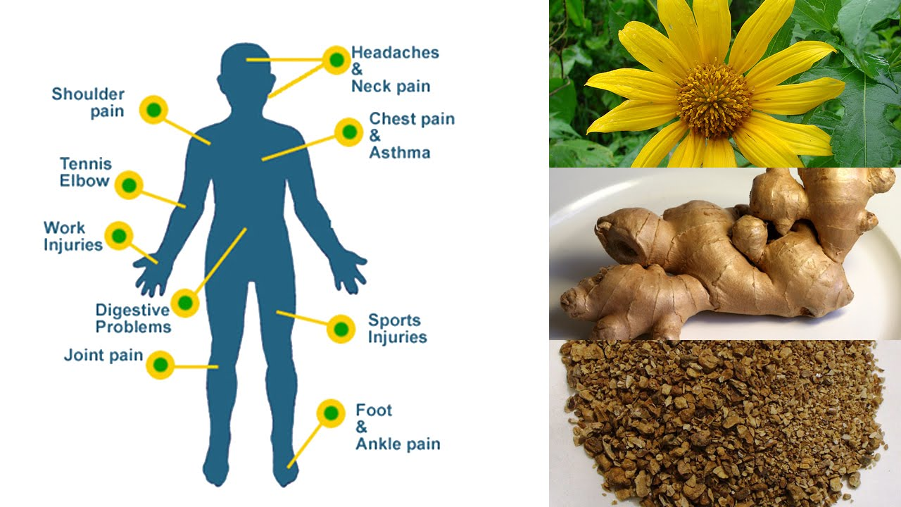 6 Herbal Remedies for Natural Pain Relief - YouTube