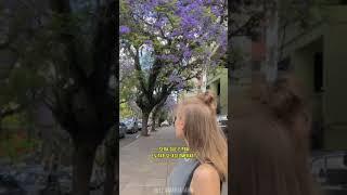 Gringa pensando sobre Porto Alegre