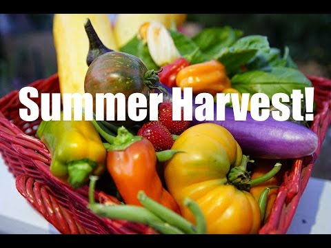 Organic Garden Summer Harvest -This is Why We Do It!