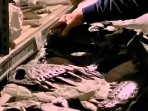 When Dinosaurs Ruled  Tyrannosaurus Rex