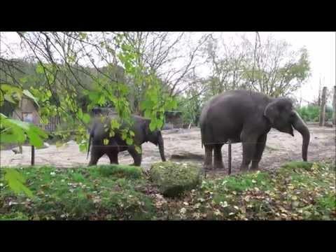 Holanda 3: Rotterdam Zoo / Diergaarde Blijdorp