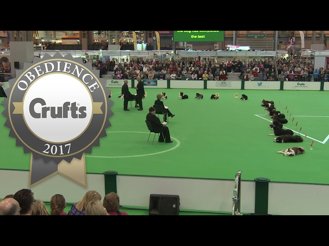 Obedience Championship - Dogs - Stays | Crufts 2017
